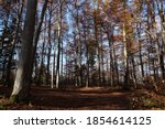 Autumn Forest In Sunlight At...