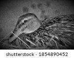 Quack  Quack  Quack  Spring Is...