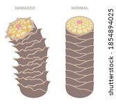normal and damaged hair. smooth ... | Shutterstock .eps vector #1854894025