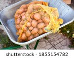 Two Bags Of Potatoes In The...