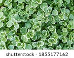 fresh green leaf with ice drops ... | Shutterstock . vector #1855177162
