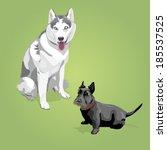 Husky Dog And Scotch Terrier....