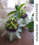 The Passion Fruit Flowers ...