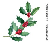 Watercolor Holly Branch With...