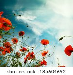 Sky Background With Red Poppie...