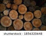 Cut Logs  Wood End Texture  A...