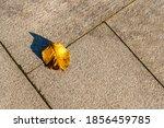 Fallen Yellow Leaf Lying On The ...