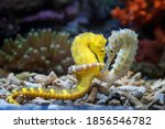 Lovely scenery of two seahorses