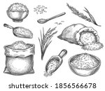sketch rice grains. vintage... | Shutterstock .eps vector #1856566678