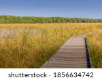 Wooden Boardwalk Through The...