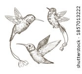 hand drawn sketch illustration...   Shutterstock .eps vector #1857013222