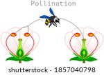 Pollination. Pollen Produced In ...