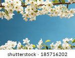 spring frame with pear blossom   Shutterstock . vector #185716202