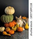 The Cat Lying Among Pumpkins