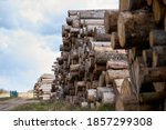 Rows Of Piled Of Logs   Waiting ...