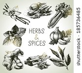 kitchen herbs and spices. hand... | Shutterstock .eps vector #185736485
