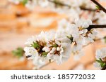 beautiful blooming branches ... | Shutterstock . vector #185772032