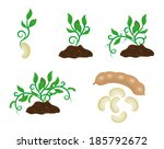 sprout in different stages | Shutterstock .eps vector #185792672