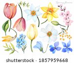 Watercolor Illustration. Spring ...