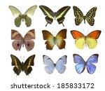 butterfly on white | Shutterstock . vector #185833172