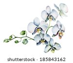 single orchid isolated on white ... | Shutterstock .eps vector #185843162