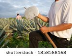 Agave Tequila Mexico  The...