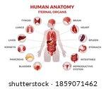 body internal organs. woman... | Shutterstock .eps vector #1859071462