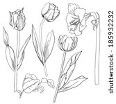 sketch  with  with tulip and... | Shutterstock . vector #185932232