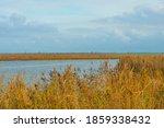 Reed Along The Edge Of A Lake...