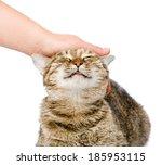 Female Hand Patting A Happy Ca...