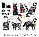 Mexican Dead Animals. Cats...