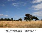 Alone tree, blue sky and yellow field - stock photo