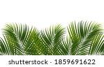 coconut leaves on white... | Shutterstock .eps vector #1859691622
