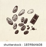 chocolate cocoa beans drawing ... | Shutterstock .eps vector #1859864608