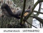 Little Cute Squirrel Sitting In ...