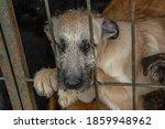 Closeup Portrait Sad Puppy Dog...