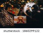 Funny Black Cat On Window Sill...