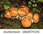 Macrophography Of A Mushroom...