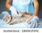 Veterinarian Doctor Is Making A ...