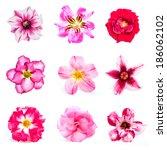 Set Of Azalea Flowers On White...