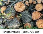 Raw Wooden Woodblocks On...