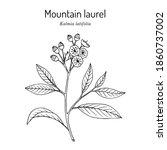 mountain laurel  calico bush ...   Shutterstock .eps vector #1860737002