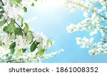branches of apple tree with... | Shutterstock . vector #1861008352