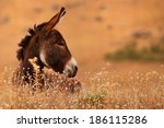 Donkey In Donkey Grass On Brow...