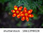 Bright Red Yellow Flowers On A...