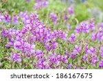 Alpine Wildflowers. August Is...