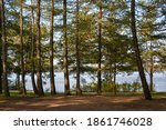 pine trees growing in a natural ... | Shutterstock . vector #1861746028