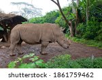 Close Up View Of A Rhino With...