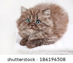 Stock photo british long hair kitten sleeping on a white towel 186196508