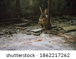 Rabbit Stuck In Abandoned...